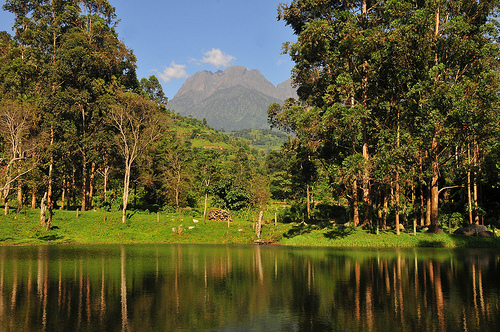 Bwindi trekking & hiking trails – interesting jungle walk