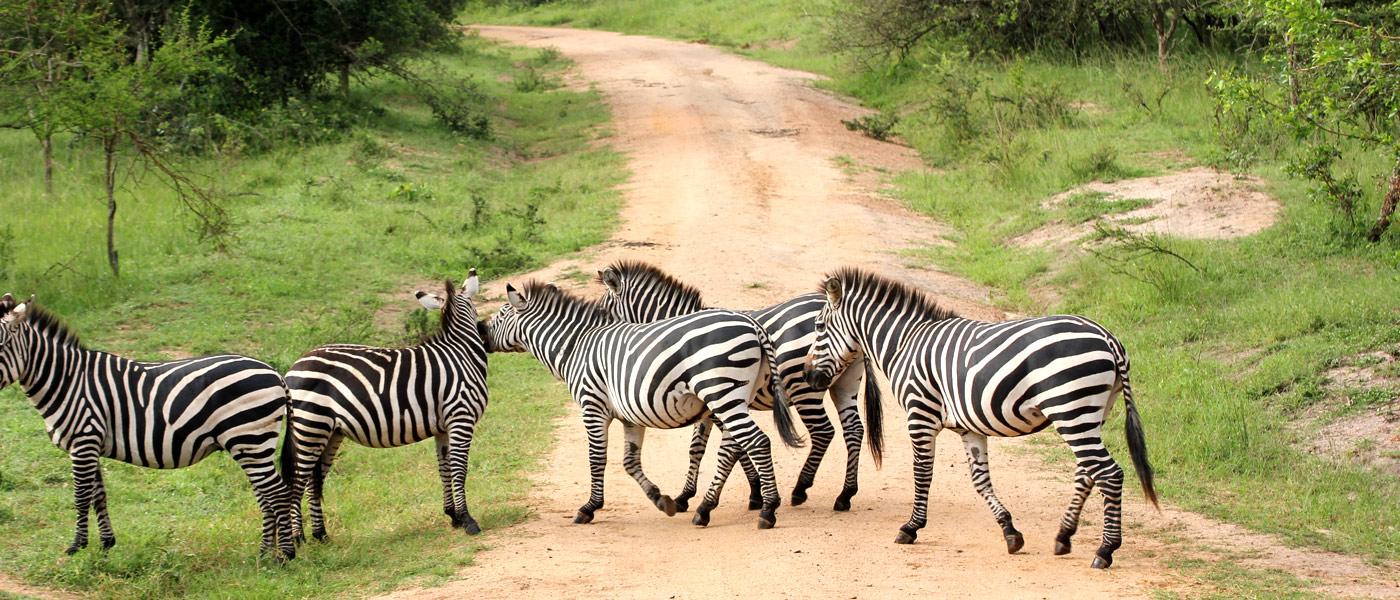 Amazing Destinations: Lake Mburo National Park