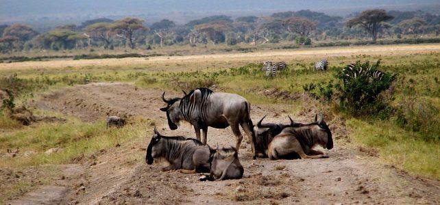 3 Days Masai Mara wildlife safari, famous savanna wilderness, big five