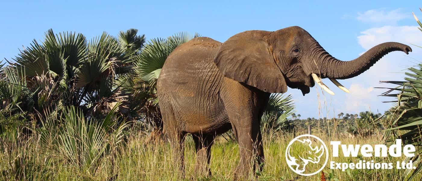 An elephant in Queen Elizabeth national park
